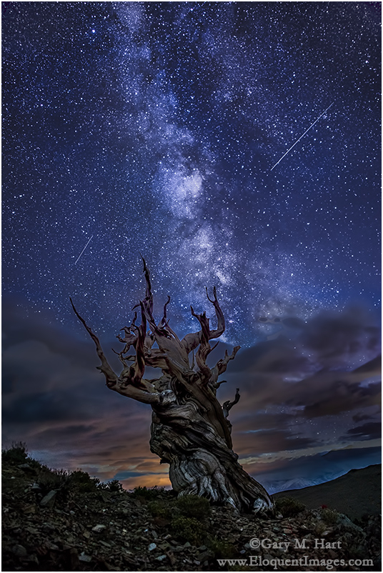 Bristlecone Night, White Mountains, California