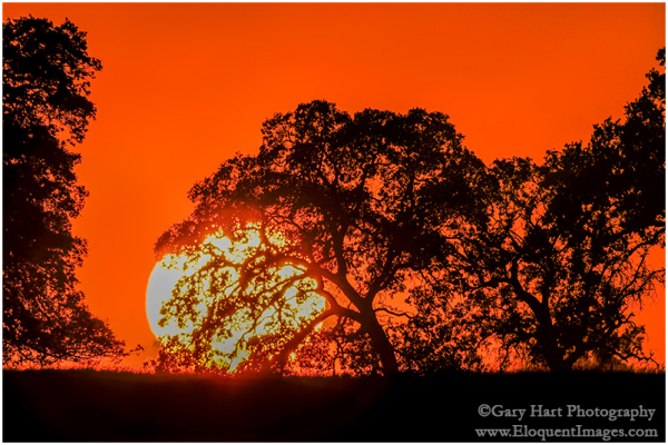 Big Sun, Sierra Foothills, California