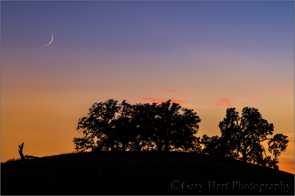 Sunset Pastoral, Sierra Foothills