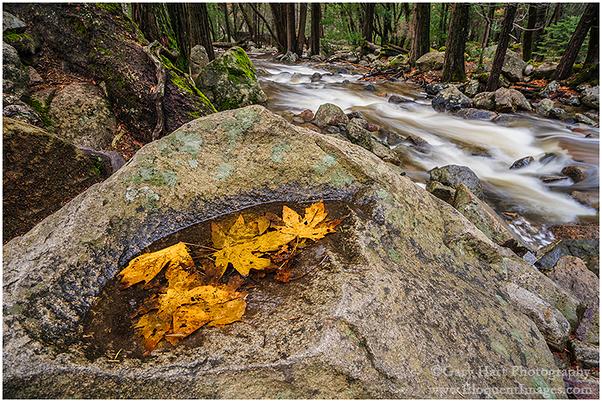 Floating Autumn Leaves, Bridalveil Creek, Yosemite