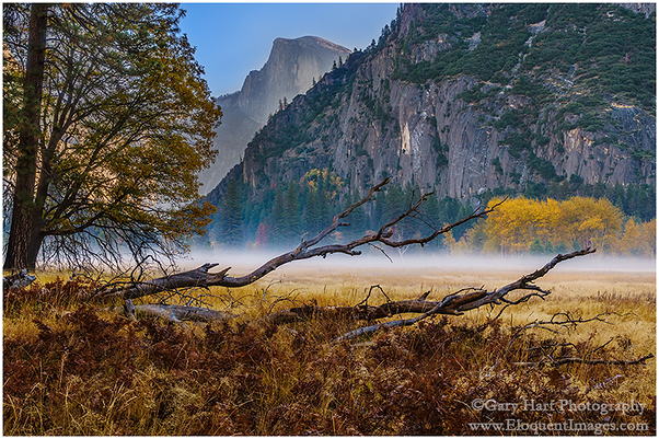 Autumn Morning, Leidig Meadow, Yosemite