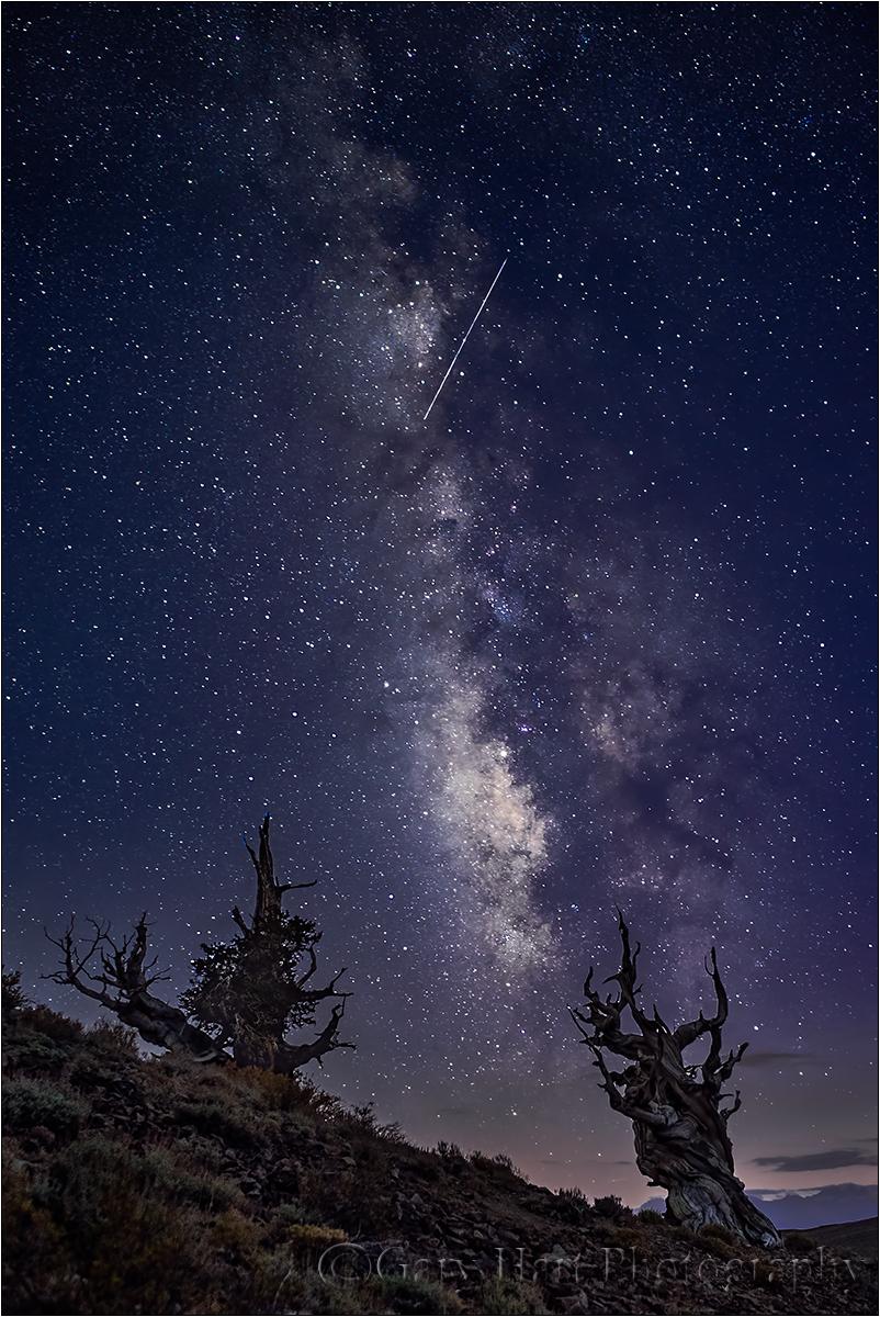 Milky Way & Meteor, Bristlecone Pines, California