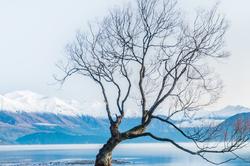 Lone Tree, Lake Wanaka, New Zealand