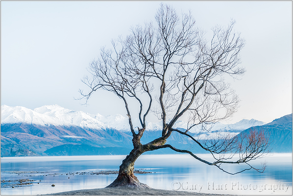 Lone Tree, Lake Wanaka, New Zealand