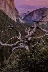 Magenta Moonrise, Yosemite Valley, Yosemite