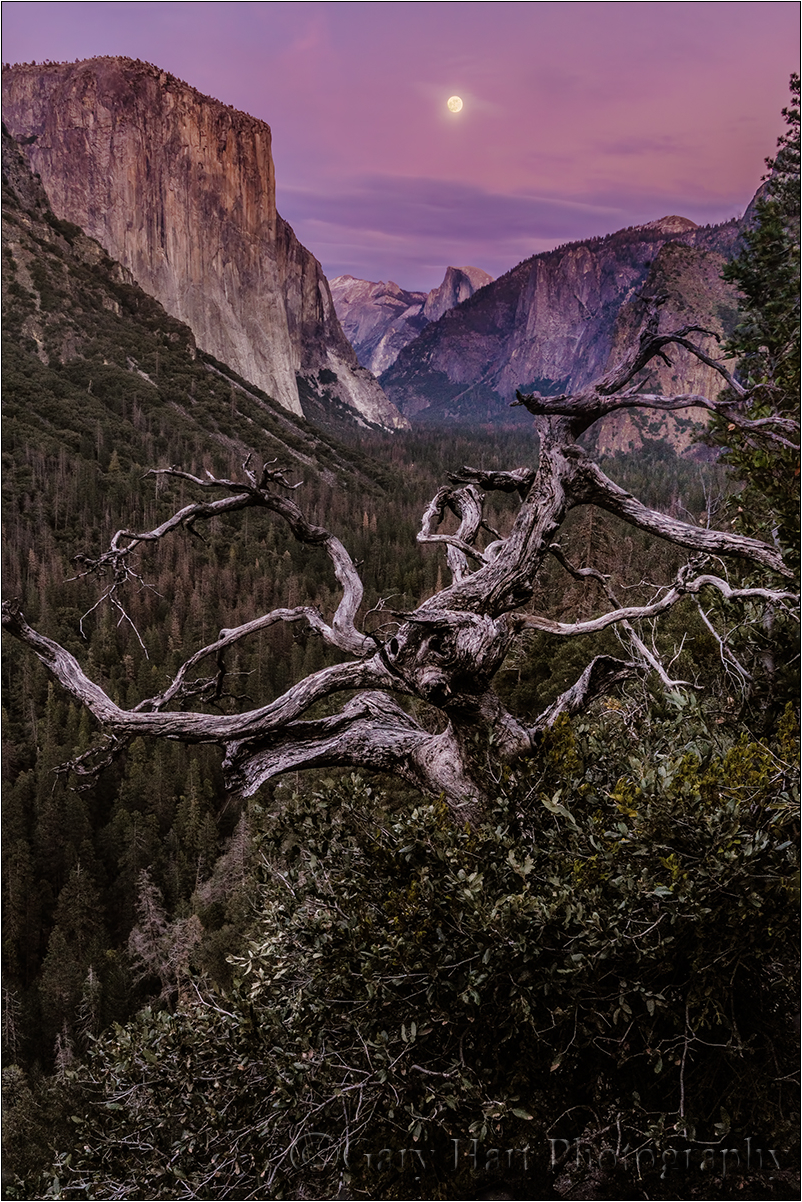 Magenta Moonrise, Yosemite Valley, Yosemite