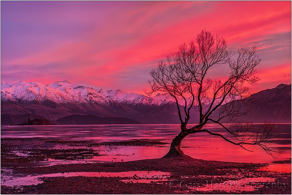 Crimson Morning, Lake Wanaka, New Zealand