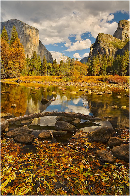 Floating Autumn Leaves, Valley View, Yosemite