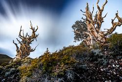 Nightfall, Schulman Grove, White Mountains, Calif.