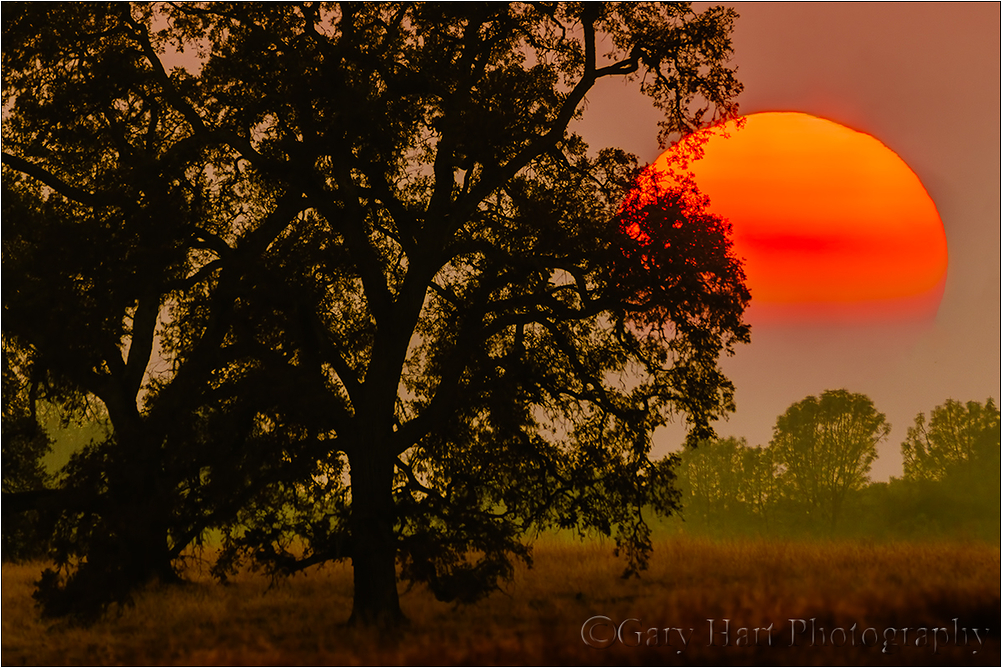 Sun and Smoke, Sierra Foothills, California