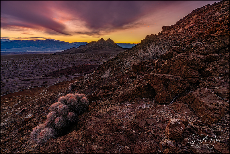 Prickly Sunset, Hell's Gate, Death Valley
