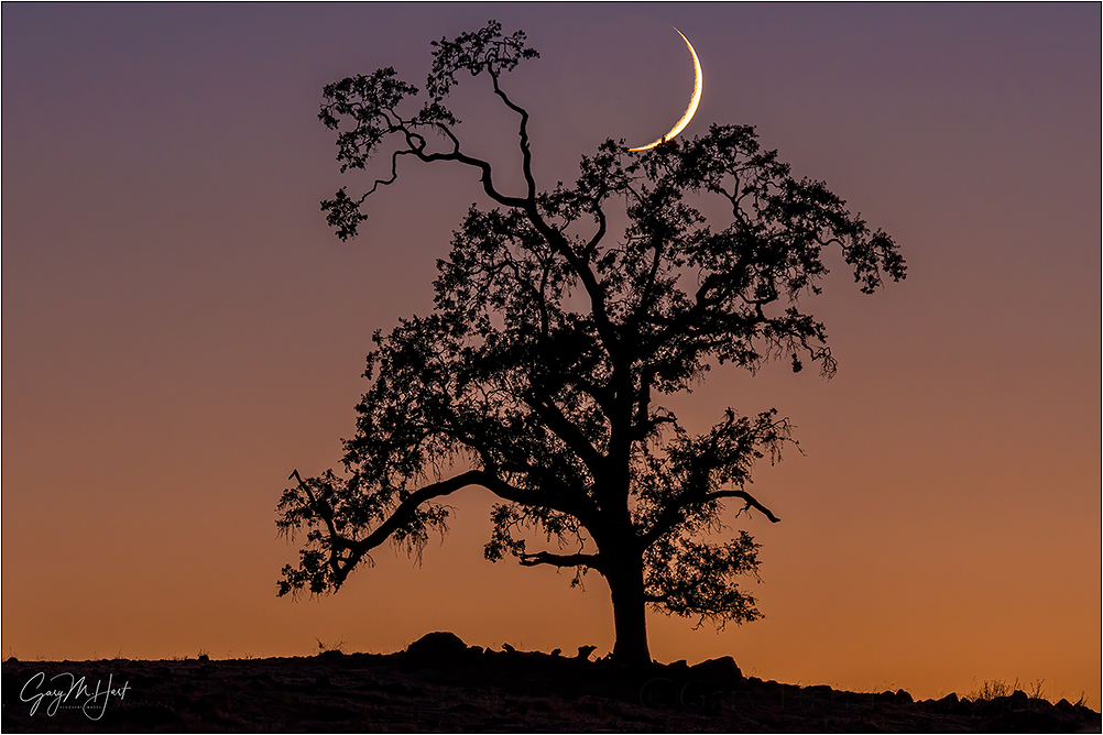 New Moon and Oak, Sierra Foothills, California