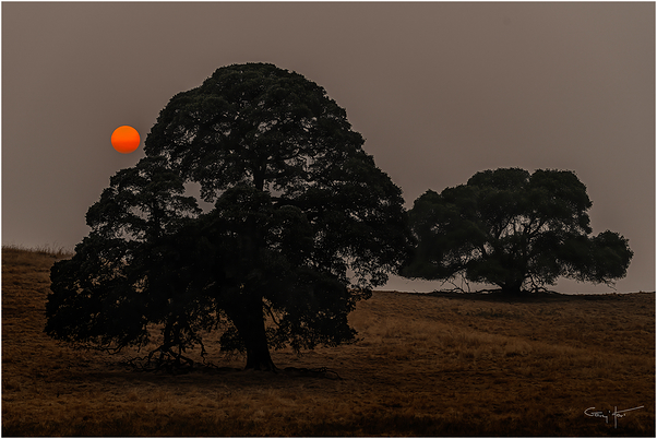 Oaks and Smoke, Sierra Foothills, California