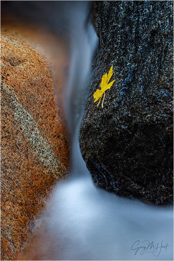 Autumn Yin and Yang, Bridalveil Creek, Yosemite