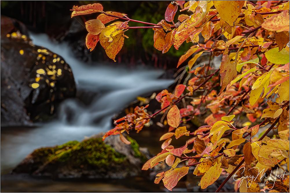 Creekside Color, Mill Creek, Eastern Sierra