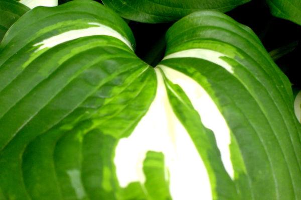 099 / Leaf