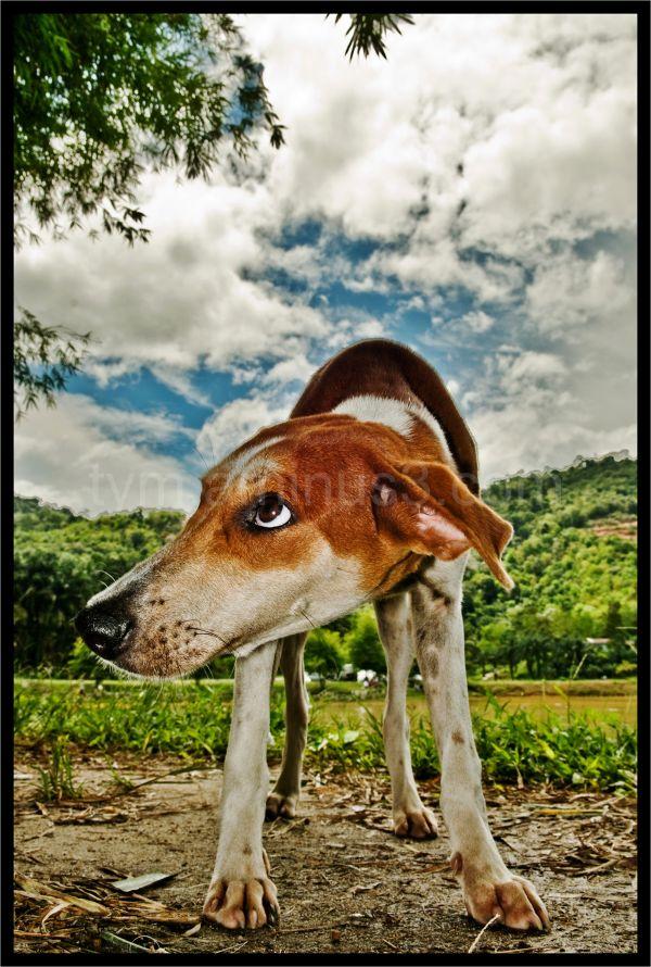 stray dog at fishing village