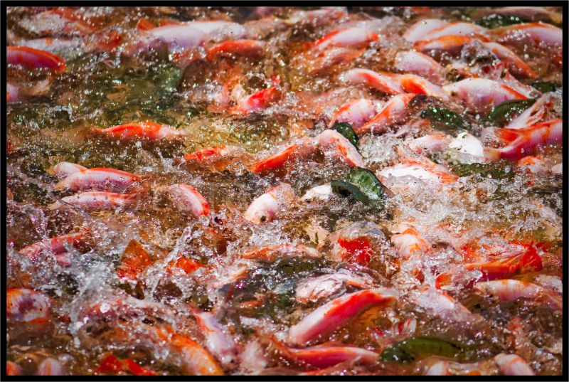 fishing in fishing valley malaysia