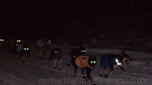 Ken Anderson's dogteam on the Yukon Quest