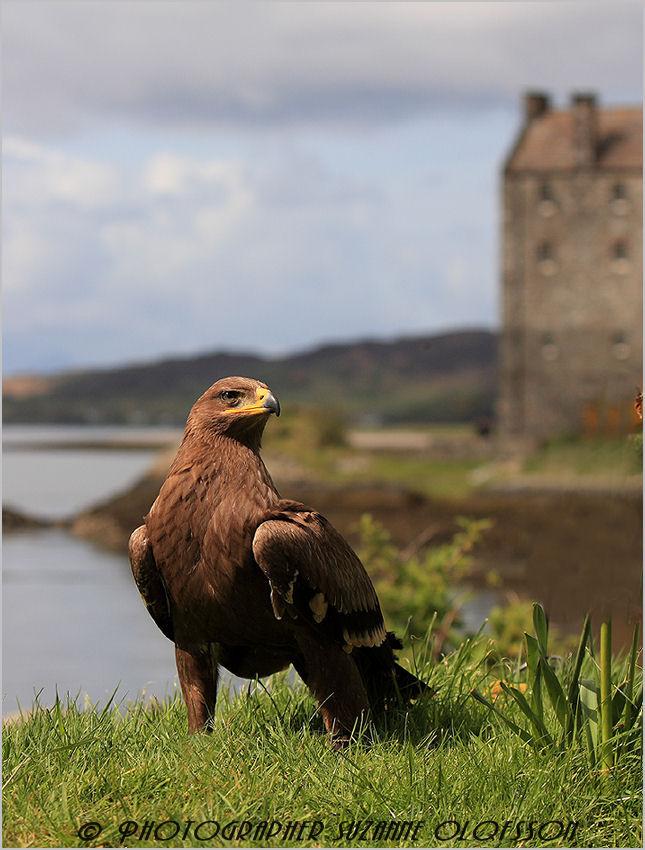 The Eagle has landed!~~~~Örnen har landat!