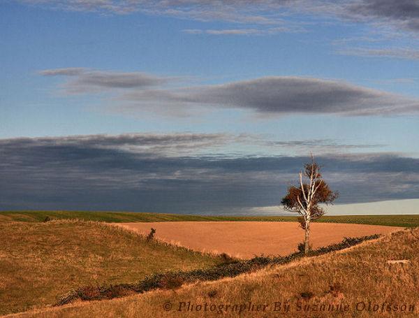 """""""The lonely tree""""      """"Det ensamma trädet"""""""