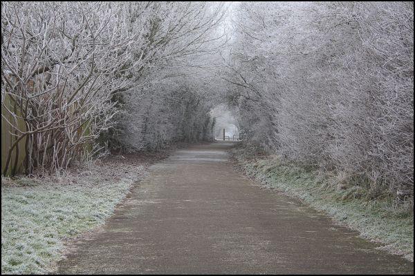 Walking Path!