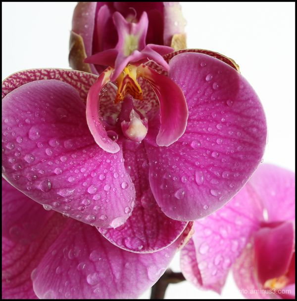 Orchid!!