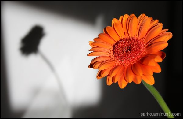Orange Daisy!!!
