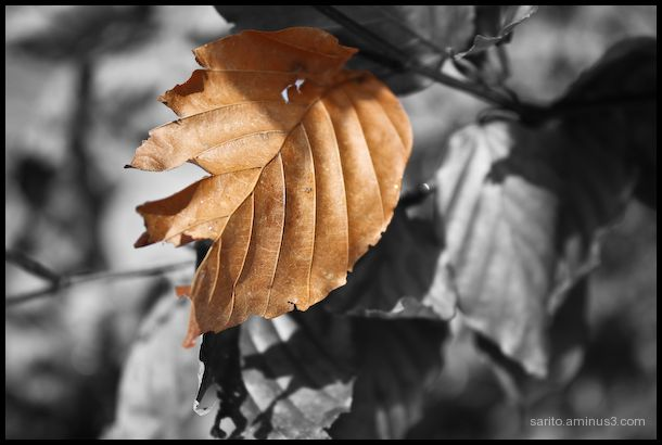 Winter Leaf!