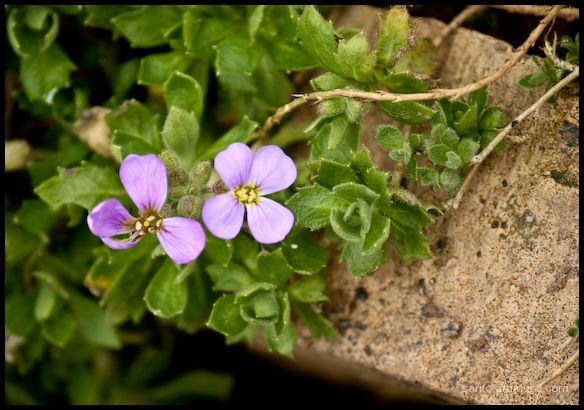 Purple flower!