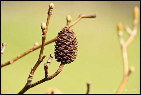 Pine cone!!