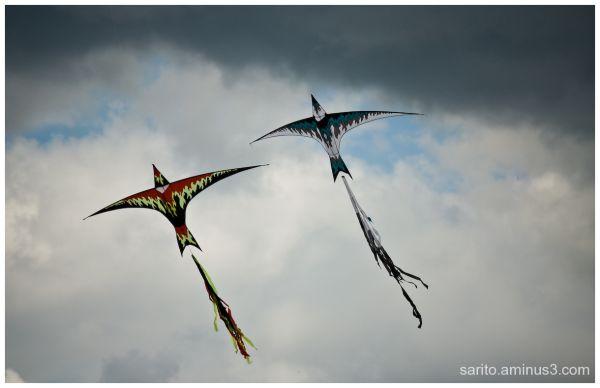 Basingstoke Kite Festival - 5