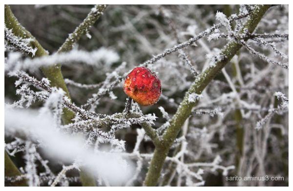 Winter (3)