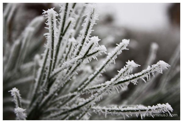Winter (4)