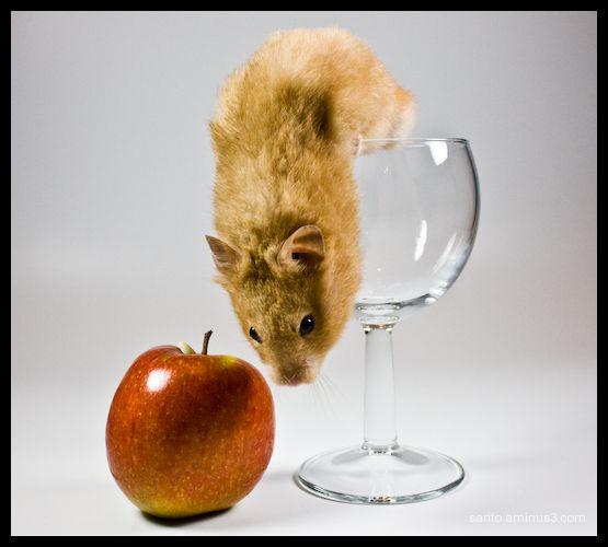 Gene the Hamster - 3