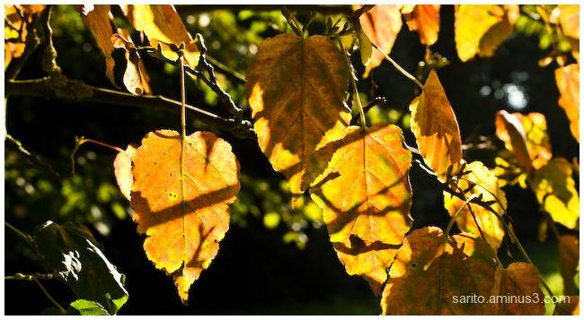 Sunlit leaves...
