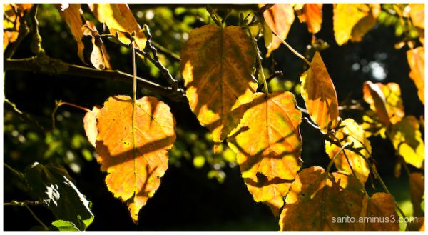 Sunlit leaves...