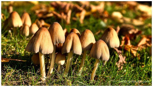 Mushroom - 1