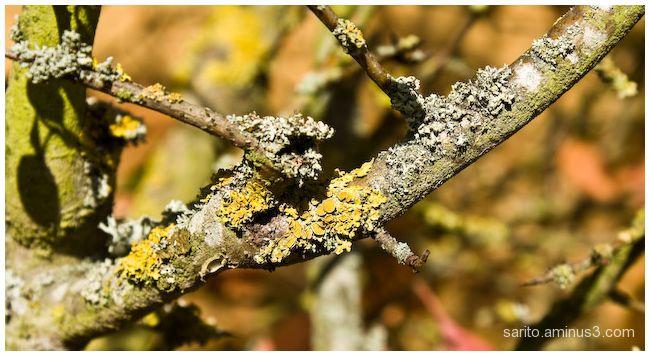 Lichen...