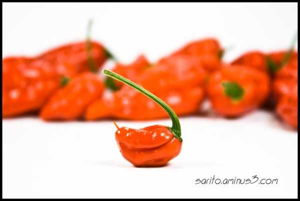 Naga Chillies...