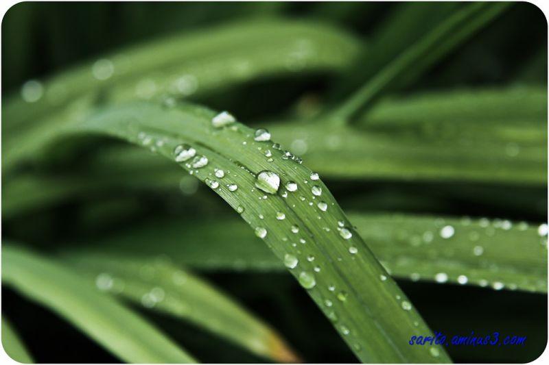 Water Drops...