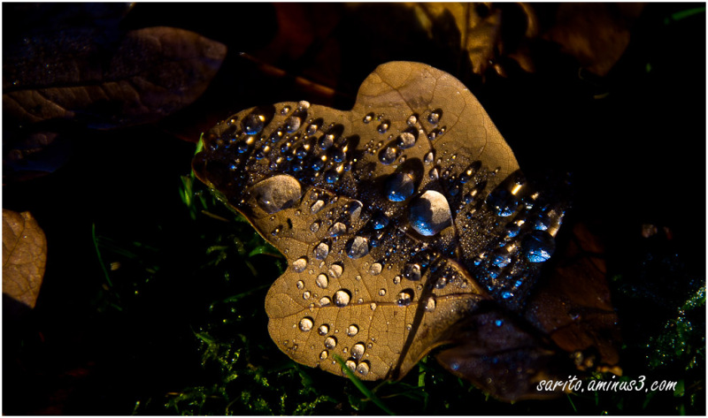 Autumn - 1: Water drops