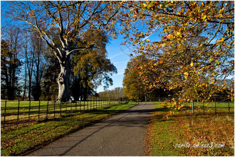 Autumn - 4