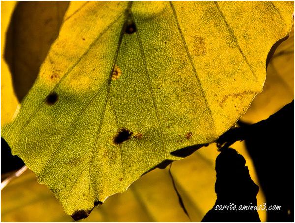 Autumn - 6: Veins