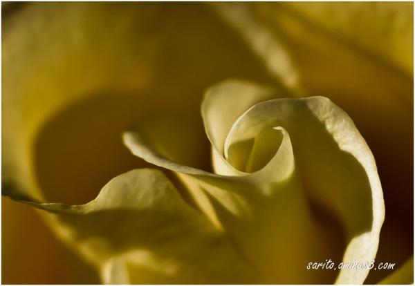 The softness...