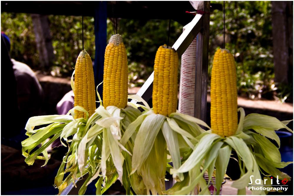 Fresh Corn...