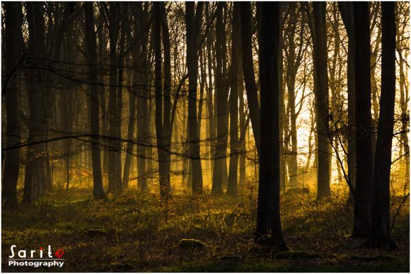 Golden Light