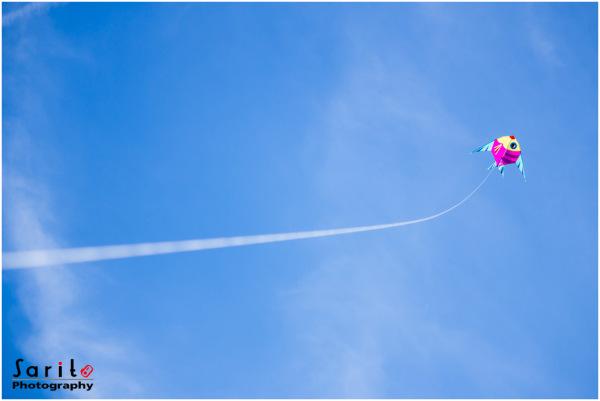 Flying Fish...