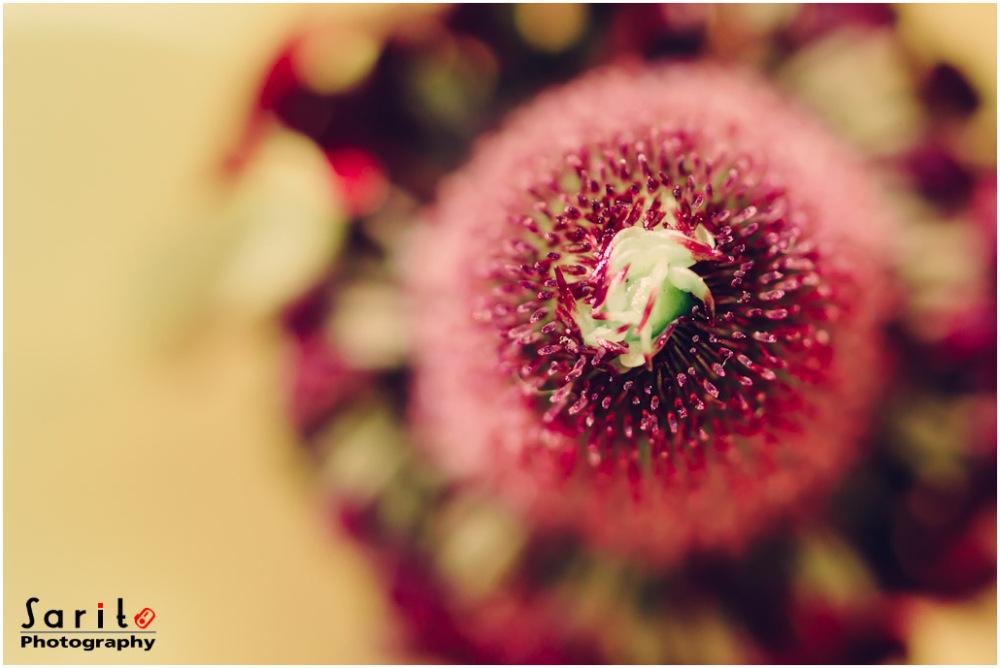 Ranunculus - 2