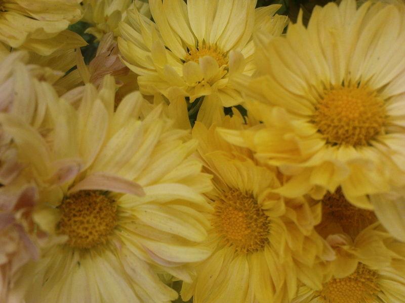 fallow flowers[012]